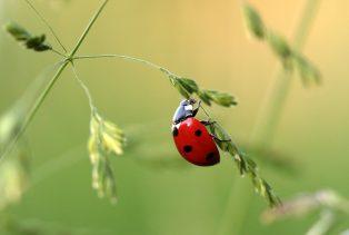 La biodiversité sur notre territoire